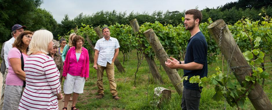Vineyard tours & tasting have started!