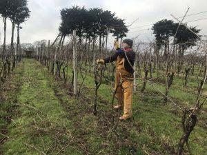 Pruning at Polgoon